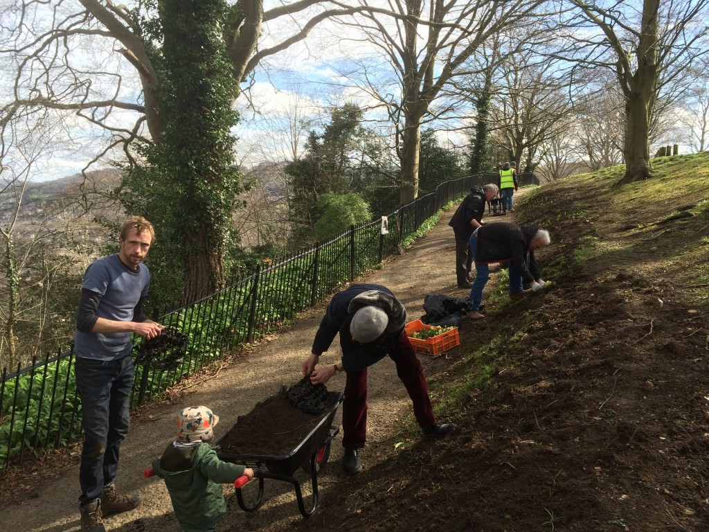 Bulb planting along the cliff path.